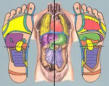 القدمين والجسم