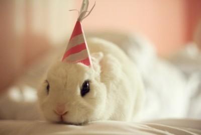 חיות ליום הולדת, הפעלה עם חיות ליום הולדת