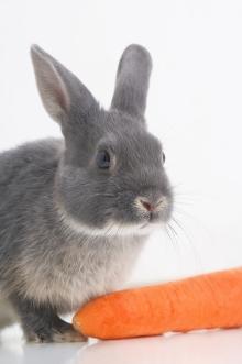 ארנבון דורש מחויבות, טיפול בייתי וטיפול וטרינרי
