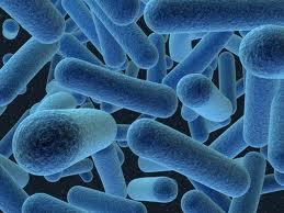 כימיקלים לטיפול בבקטריות