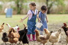 ילדים מאכילים תרנגולים בטיפול באמצעות חיות