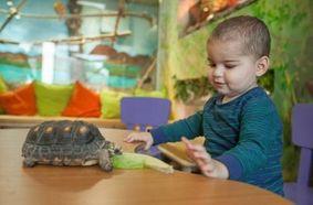 טיפול בעזרת בעלי חיים לילדים חולי סרטן  ילדה וצב