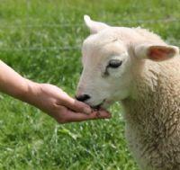 טיפול בעזרת בעלי חיים גדי
