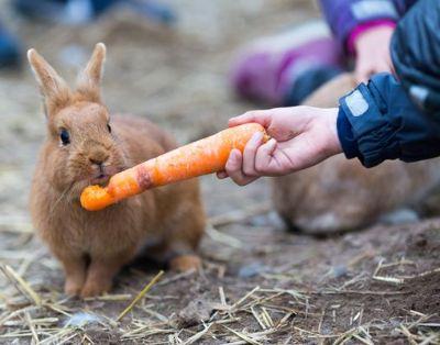 טיפול בעזרת בעלי חיים ארנבון
